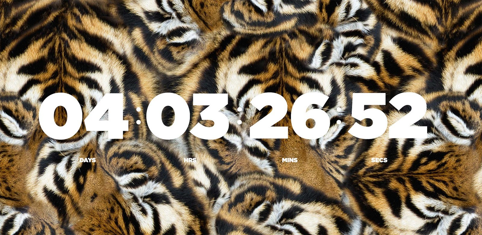 countdown_tiger